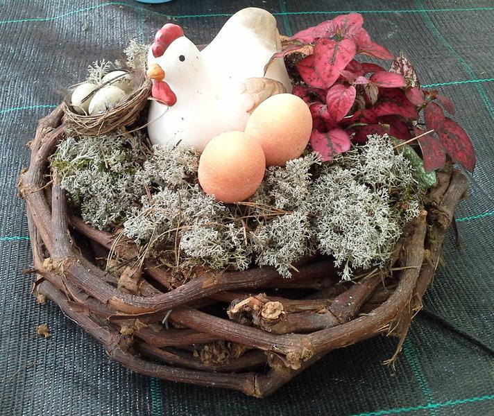 Viveros rocha vivero de plantas y flores las palmas de for Viveros gran canaria