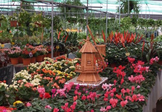 Viveros rocha garden center te ayuda a cuidar tus plantas for Todo para viveros